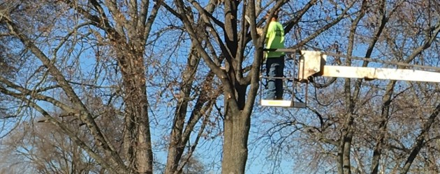 Neighborhood tree trimming continues